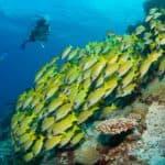 six senses laamu maldives surf resort yin yangs scuba diving